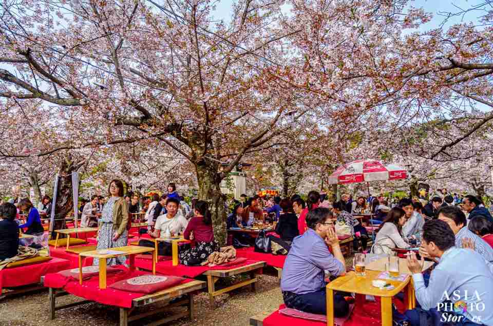 Sakura Season: When Japan Springs to Life